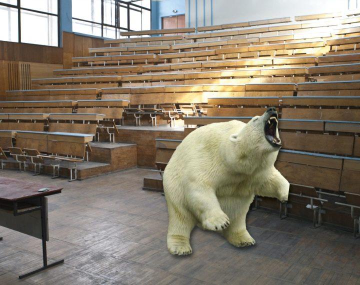 Las universidades españolas anuncian que el único requisito para conseguir el título este curso será sobrevivir a la propia universidad. El TFG se sustituirá por un combate a muerte contra un oso polar.